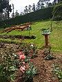 Rose Garden Ooty 3.jpg