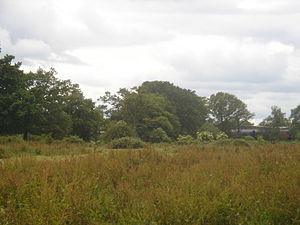 Forge Wood - Rough pastureland south of Radford Road in Tinsley Green, photographed in 2009.  This land is on the boundary of the application site.