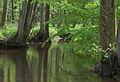 Ruisseau à Eekholt.jpg