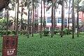 SZ 深圳 Shenzhen 蛇口 Shekou Nanshan 四海公園 Sihai Park plants and trees Sept 2017 IX1 04.jpg
