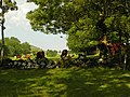 Salers , pays de pierre et de grands espaces, situé entre Dordogne et Puy-Mary - panoramio (20).jpg
