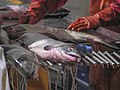 Salmon sorting Taku Smokeries wc29.jpg