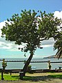 Santa Cruz - Portugal (3295275275).jpg