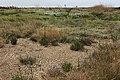 Sarretière à sec et flore dans le marais du Conseiller.jpg
