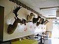 Scarsdale Louisiana CITGO September 2009 02.jpg