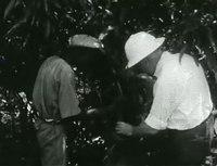 File:Scenes in West Africa.webm