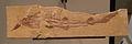 Scyliorhinus elongatus AMNH 13983.jpg