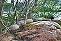 Sea urchins, Calvert Island, BC.jpg