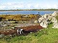 Seaweed strandline - geograph.org.uk - 1435498.jpg
