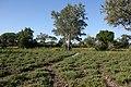 Selous Game Reserve-Swampy.jpg