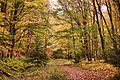 Seneca-creek-trail-10 - West Virginia - ForestWander.jpg