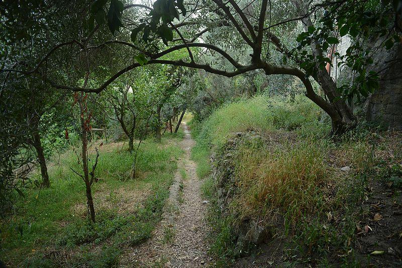File:Sentiero Colli Aminei - Sanità.jpg