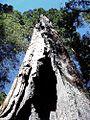 Sequoia park.jpg