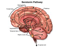 aumento de la serotonina