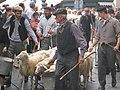 Sfilata Sagre pecore Villanova.jpg