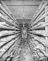 Sharp freezer room, New England Fish Company plant in Ketchikan, Alaska, circa 1908 (AL+CA 3372).jpg