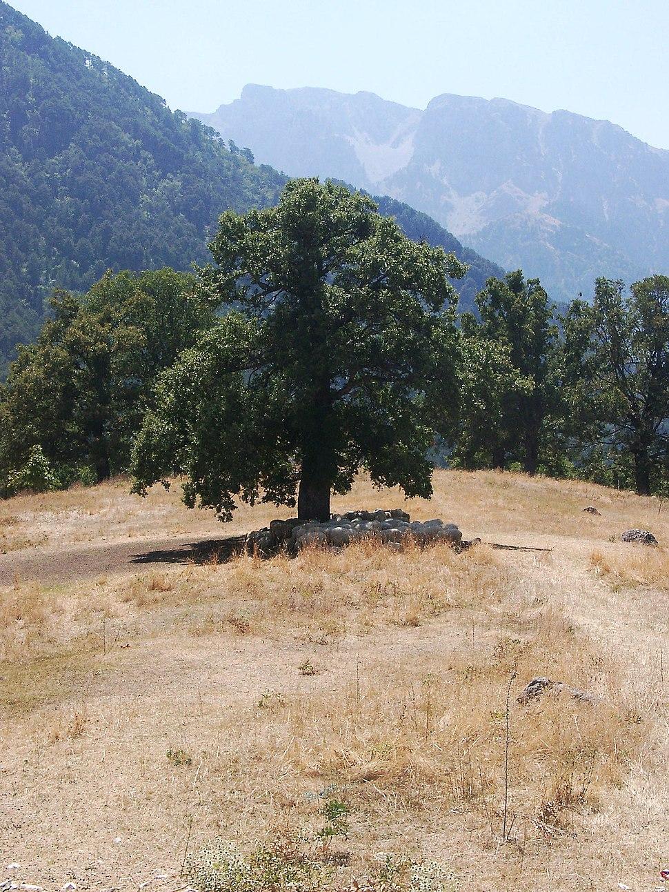 Sheep in shadow, Konitsa, Ioannina prefecture, Greece