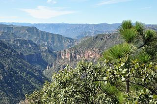 Sierra Madre Occidental pine–oak forests Tropical and subtropical coniferous forests ecoregion of Mexico and the United States