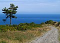 Skyhill Road, Scots Pine, sea and sky. Isle of Man - geograph.org.uk - 35285.jpg