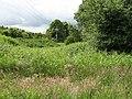 Slainsfield Wood - geograph.org.uk - 863530.jpg