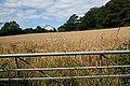Small Barley Field - geograph.org.uk - 216193.jpg