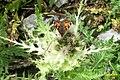 Small tortoiseshell (Gru) (24013289678).jpg