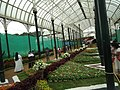 Snap from Lalbagh Flower Show Aug 2013 8359.JPG
