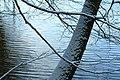 Sneeuw in Meerdaalbos - 373046 - onroerenderfgoed.jpg