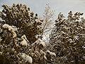Snow in Afghanistan.jpg