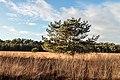 Solitaire vliegden. Locatie, Kroondomein Het Loo. 25-12-2020 (d.j.b.) 04.jpg