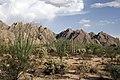 Sonora Desert 2007.jpg