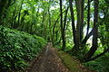 South West Coast Path in woods north of Penlee Point (0073).jpg