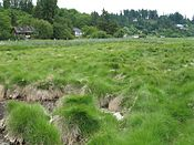 that high marshes have salinity levels up to four times that of sea water?