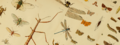 Species Edit-a-thon banner.png