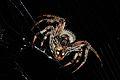 Spider close up.jpg