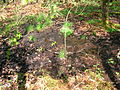 Spier's Well, Marshalland Burn.JPG