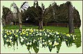 Spring. Home Park. Kingston-upon-Thames. - panoramio.jpg