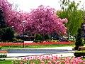 Spring bloom (4546932568).jpg