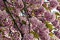 Spring in Brussels (5613987563).jpg