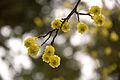 Spring is Springing (4470448927).jpg