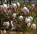 Spring is in the air (4540774489).jpg