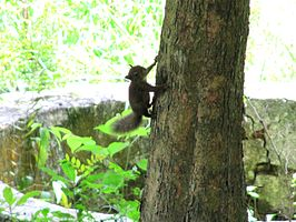 Squirrel climbing a tree.jpeg