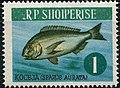 Stamp of Albania - 1964 - Colnect 342863 - Gilt head Bream Sparus aurata.jpeg