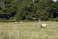 Standing Stone below Coed Bedo - geograph.org.uk - 342232.jpg