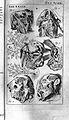 Steven Blaankart, Anatomia reformata, 1687 Wellcome L0025637.jpg