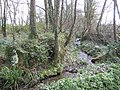 Stream through the woods - geograph.org.uk - 367416.jpg