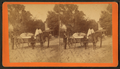 Street, Gainesville, Fla. (A horse-drawn cart filled with cotton(?) in a street. Gainesville, Fla.), from Robert N. Dennis collection of stereoscopic views.png