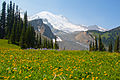 Summerland wildflowers with Mt. Rainier backdrop 02.jpg