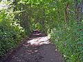 Sunlit path (3551146037).jpg