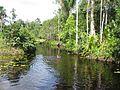 Suriname Colakreek.jpg